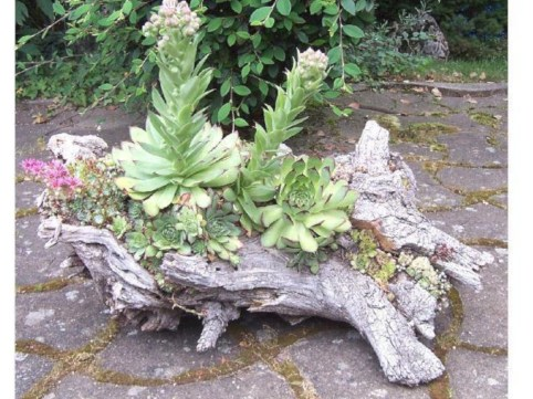 Ideas to arrange your succulent with driftwood 07