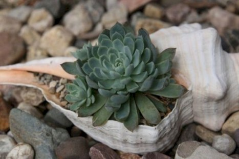 Ideas to arrange your succulent with driftwood 26