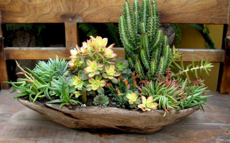 Ideas to arrange your succulent with driftwood 28