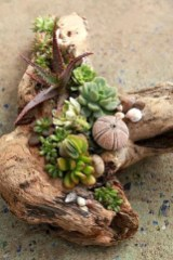 Ideas to arrange your succulent with driftwood 38