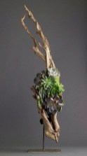 Ideas to arrange your succulent with driftwood 42