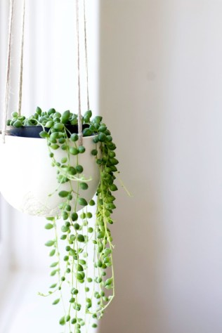 Indoor hanging planters you can make yourself 12