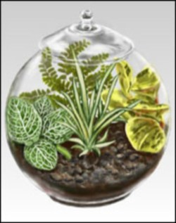 Amazing ways to planting terrarium 03
