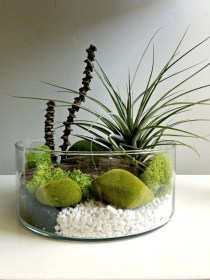 Amazing ways to planting terrarium 05