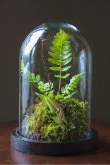 Amazing ways to planting terrarium 08