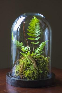 Amazing ways to planting terrarium 08