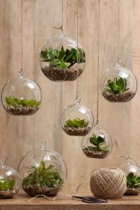 Amazing ways to planting terrarium 10