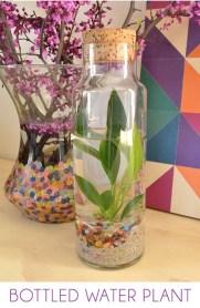 Amazing ways to planting terrarium 11