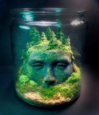 Amazing ways to planting terrarium 29