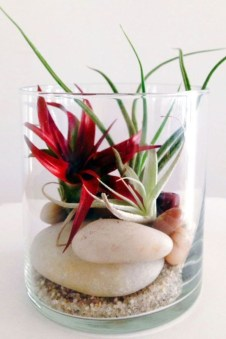 Amazing ways to planting terrarium 33