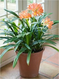 Best indoor plants you can grow without care 03