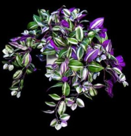 Best indoor plants you can grow without care 04