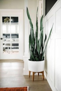Best indoor plants you can grow without care 13