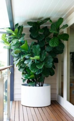 Best indoor plants you can grow without care 15