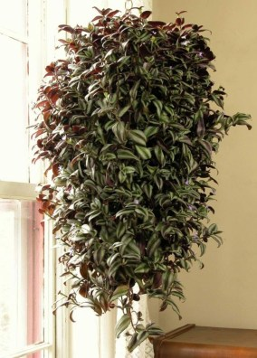 Best indoor plants you can grow without care 16