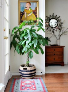 Best indoor plants you can grow without care 25