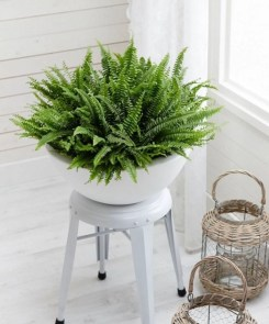 Best indoor plants you can grow without care 26