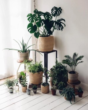 Best indoor plants you can grow without care 27