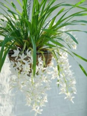 Best indoor plants you can grow without care 29