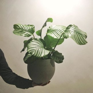 Best indoor plants you can grow without care 33