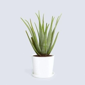 Best indoor plants you can grow without care 39