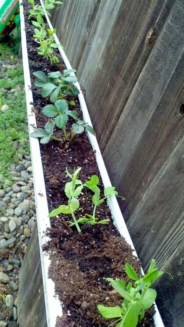 Creative ways to grow strawberry at your garden 03