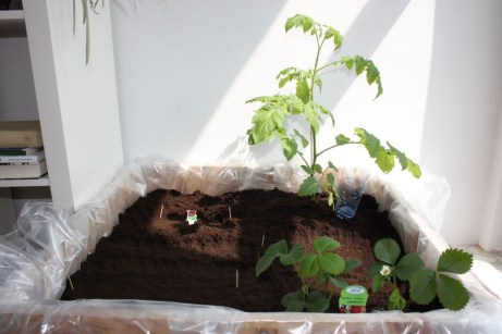 Creative ways to grow strawberry at your garden 07