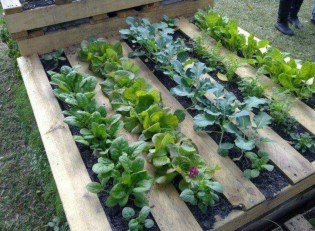 Creative ways to grow strawberry at your garden 18