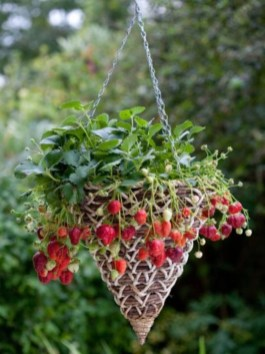 Creative ways to grow strawberry at your garden 21