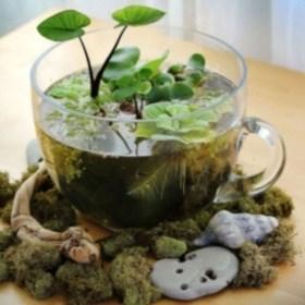 Diy indoor container water garden ideas 04