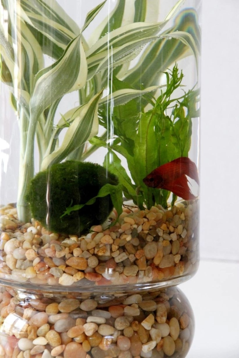 beautiful indoor container water garden to your space be sure to take a look at these amazing below So you can make any of it to beautify your home