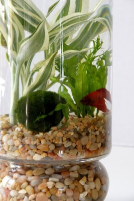 Diy indoor container water garden ideas 06