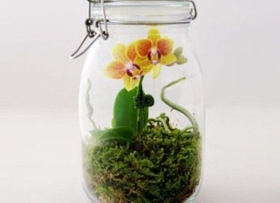 Container Water Gardens for Small Spaces - Landscaping Network