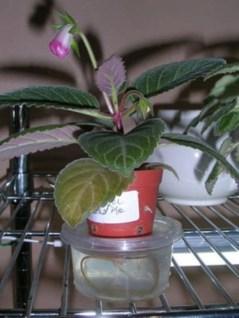 Diy indoor container water garden ideas 09