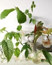 Diy indoor container water garden ideas 11
