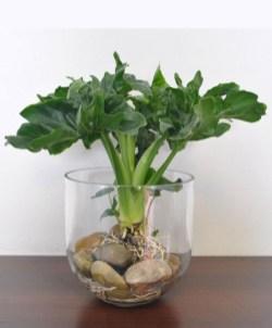 Diy indoor container water garden ideas 13