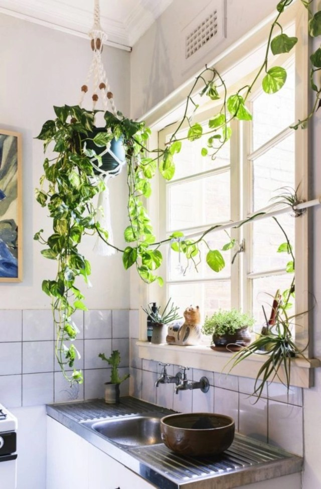 Kitchen indoor plants to make a difference in your kitchen