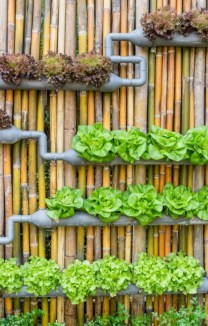 Diy hydroponic gardens for your small house 13