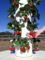 Diy hydroponic gardens for your small house 31