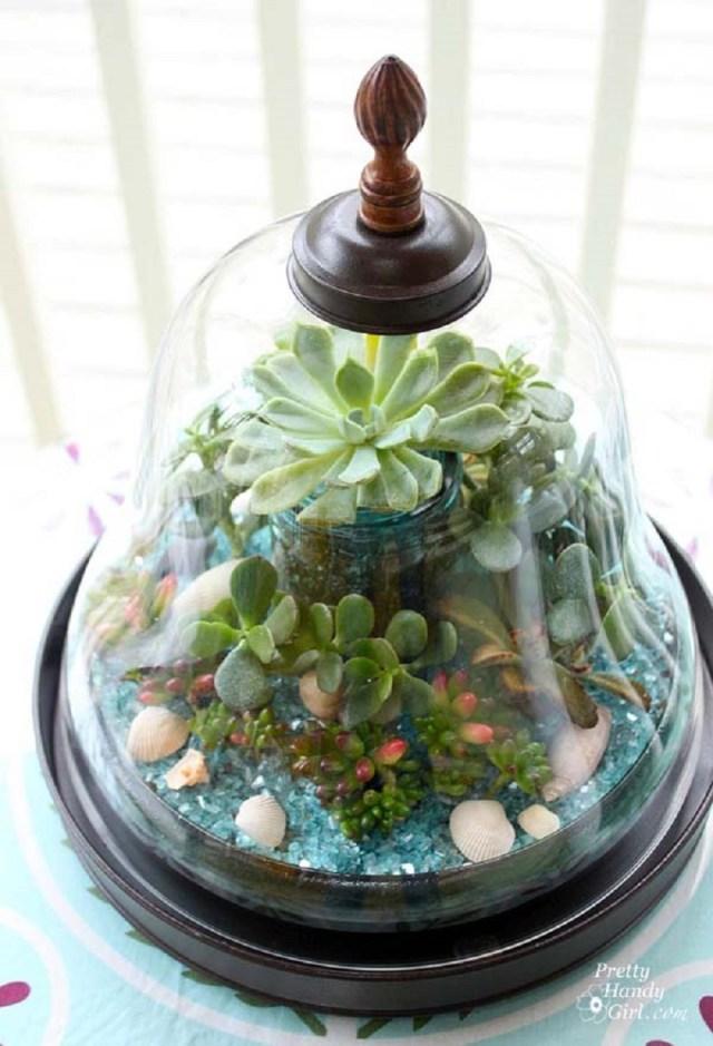 Bell cloche terrarium