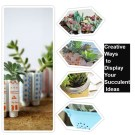 Creative ways to display your succulent