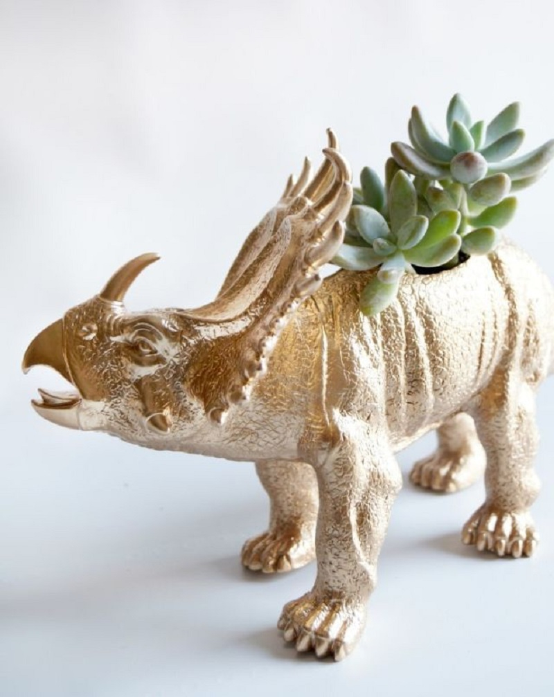 Dinosaur type succulents