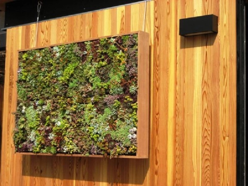 Modern look living wall