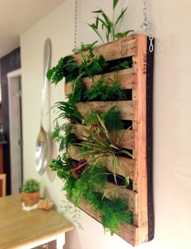 Living wall crafted from a shipping pallet