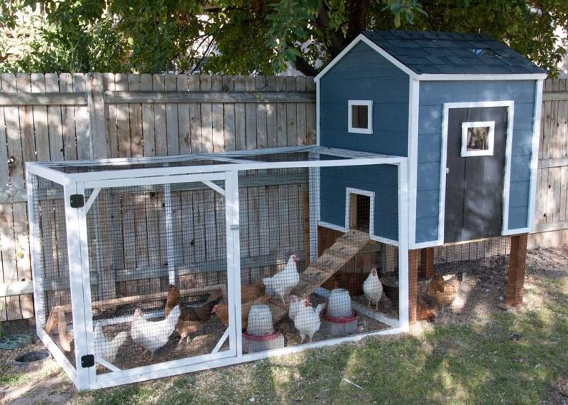 Navy blue chicken coop
