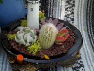 Beautiful and incredible fall succulent ideas 16
