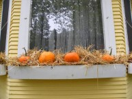 Cheap and easy fall window boxes ideas 07