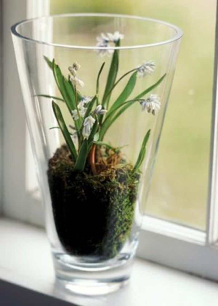 Simple ideas for adorable terrariums 10