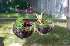 Simple ideas for adorable terrariums 29