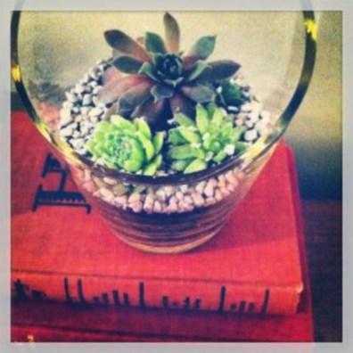 Simple ideas for adorable terrariums 45